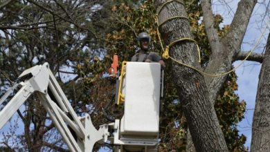 Photo of Why Do You Need a Tree Service Company?