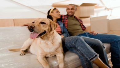 Photo of How to Make Moving with Dogs Easier?