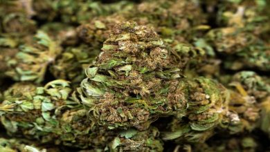 Photo of What To Know About The Wholesale CBD Flower